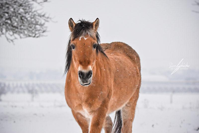 Ronja im Schnee